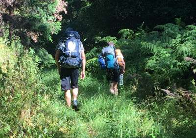 3 men walk into the bush with their hiking packs on their backs.